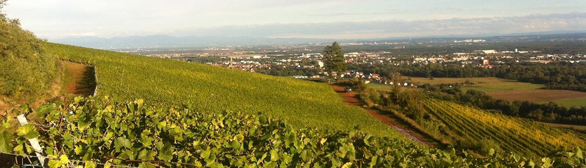 domaine-steinbach